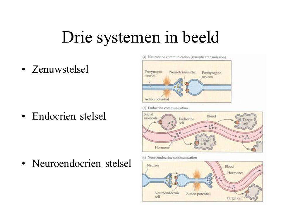 Drie systemen in beeld Zenuwstelsel Endocrien stelsel Neuroendocrien stelsel