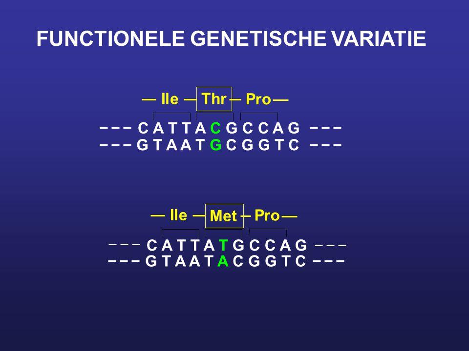FUNCTIONELE GENETISCHE VARIATIE C A T T A C G C C A G G T A A T G C G G T C Ile Thr Pro C A T T A T G C C A G G T A A T A C G G T C Ile Met Pro
