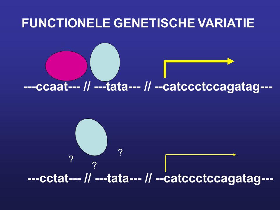 ---ccaat--- // ---tata--- // --catccctccagatag--- ---cctat--- // ---tata--- // --catccctccagatag--- ? ? ? FUNCTIONELE GENETISCHE VARIATIE
