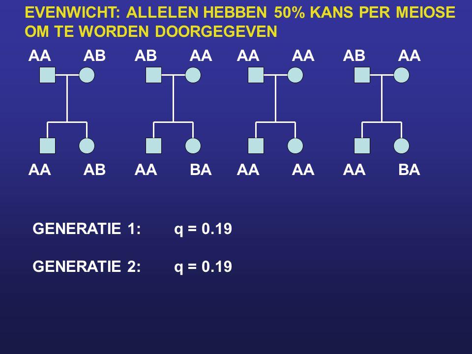AAAB AA ABAA BAAA ABAA BAAA GENERATIE 1:q = 0.19 GENERATIE 2:q = 0.19 EVENWICHT: ALLELEN HEBBEN 50% KANS PER MEIOSE OM TE WORDEN DOORGEGEVEN