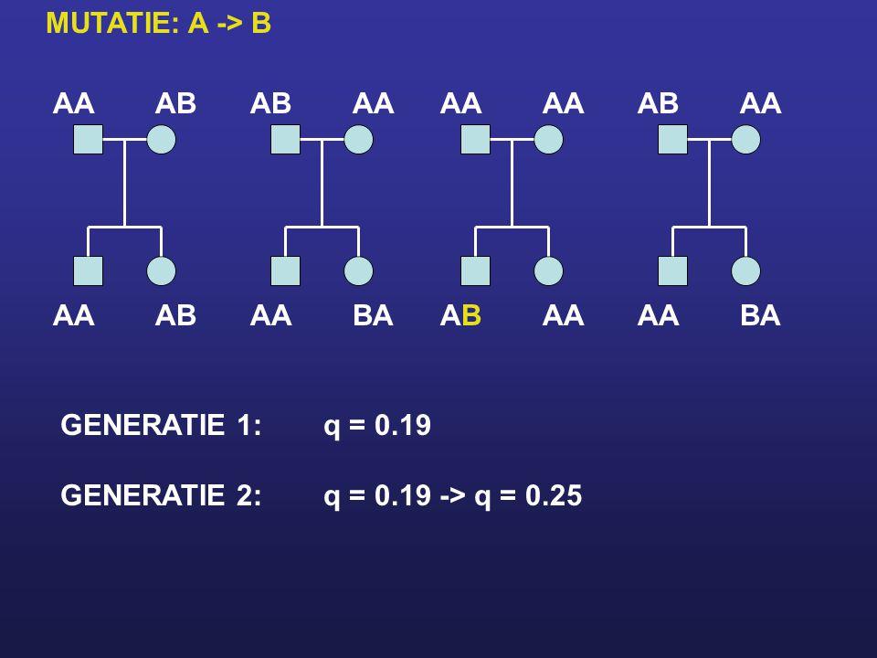 AAAB AA ABAA BAAA ABAB ABAA BAAA GENERATIE 1:q = 0.19 GENERATIE 2:q = 0.19 -> q = 0.25 MUTATIE: A -> B