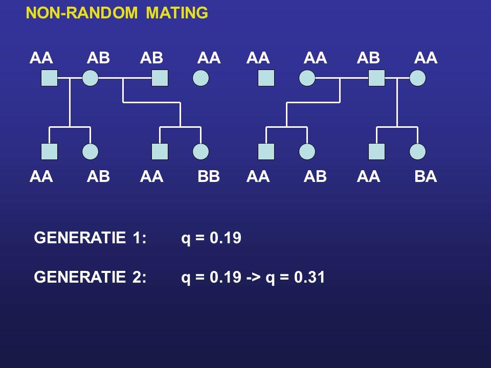 AAAB AA ABAA BBAA ABAA ABAA BAAA GENERATIE 1:q = 0.19 GENERATIE 2:q = 0.19 -> q = 0.31 NON-RANDOM MATING