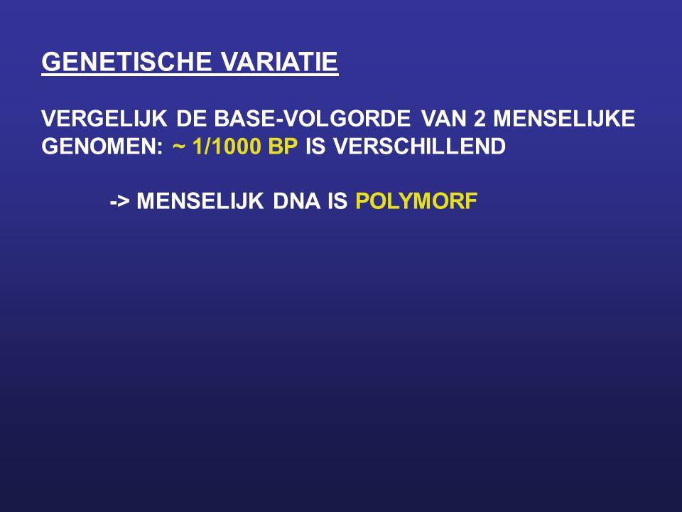 GENETISCHE VARIATIE VERGELIJK DE BASE-VOLGORDE VAN 2 MENSELIJKE GENOMEN: ~ 1/1000 BP IS VERSCHILLEND -> MENSELIJK DNA IS POLYMORF