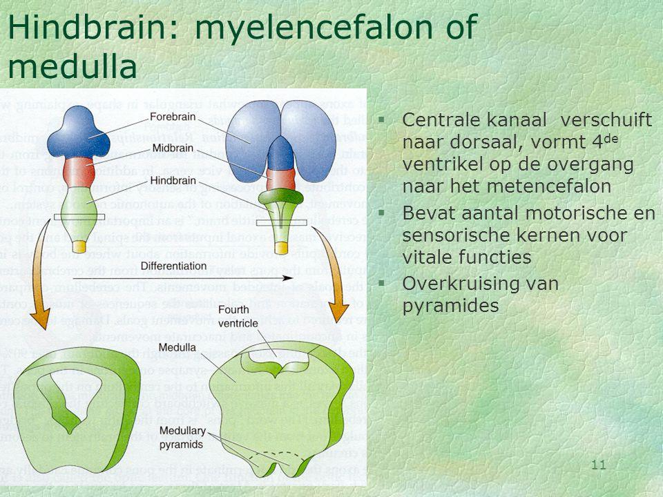 28-08-0011 Hindbrain: myelencefalon of medulla §Centrale kanaal verschuift naar dorsaal, vormt 4 de ventrikel op de overgang naar het metencefalon §Be