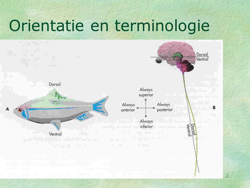 28-08-002 Orientatie en terminologie