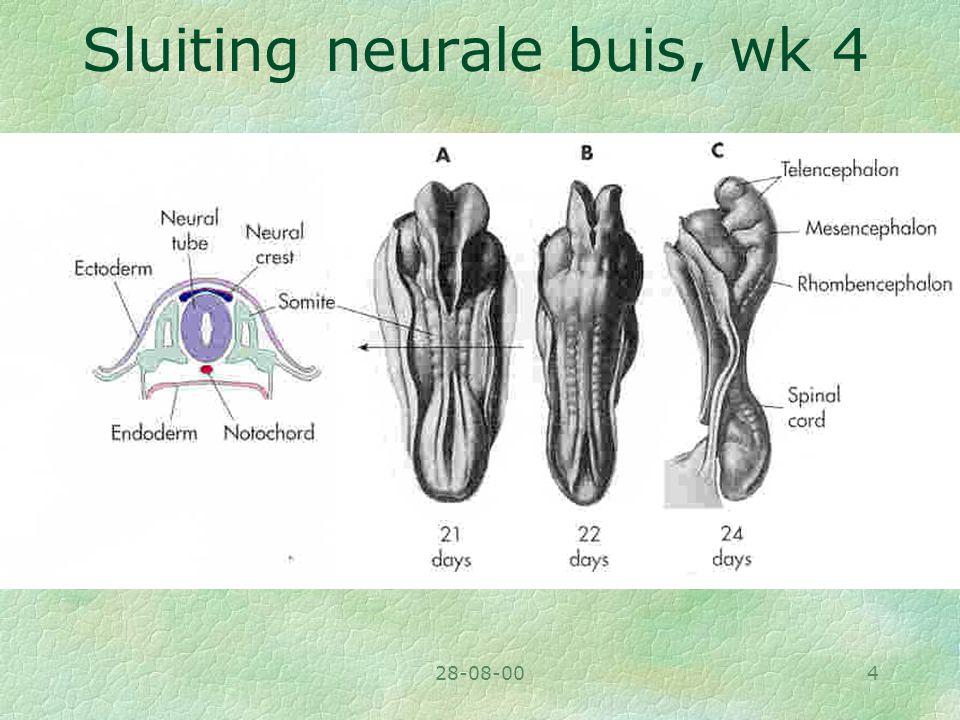 28-08-004 Sluiting neurale buis, wk 4
