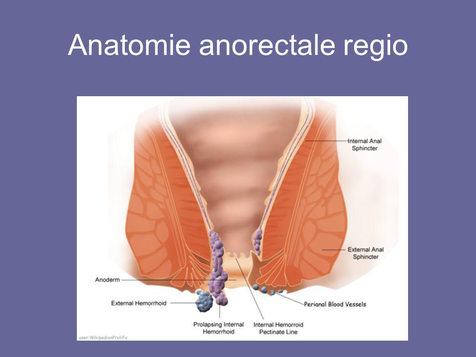 Anatomie anorectale regio