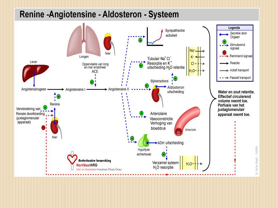 Effecten van angiotensine II  Arteriolaire en veneuze vasoconstrictie  Sympathico tonus verhoogd  Aldosteron productie -Na en waterretentie -K uitscheiding -toename plasmavolume  Remodeling collegenase productie, hartspiervezels worden losser, hartdilatatie/hypertrofie vezels.