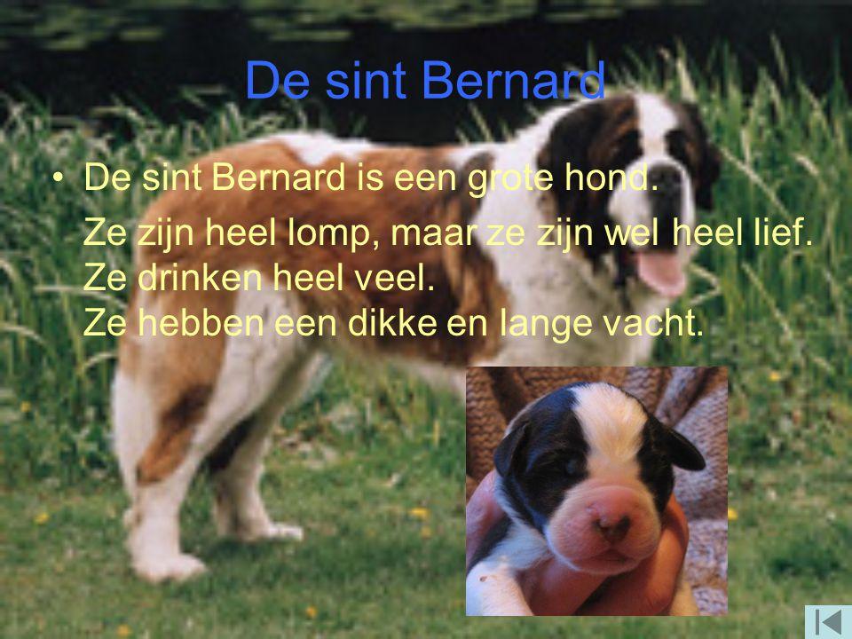 De labrador De labrador word zo'n 15 jaar. Ze eten best wel veel en ze drinken ook best wel veel. Je hebt ze in verschillende kleuren, bijv. bruin, zw