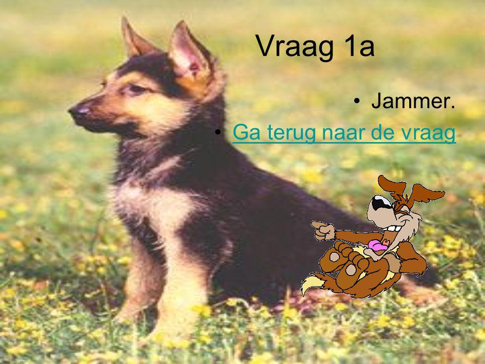 De quiz Vraag 1 Hoe zijn puppy's als ze geboren zijn a Ze hebben hun ogen open en hebben een dikke vacht b Ze zijn kaal en hebben hun ogen dicht CZe h