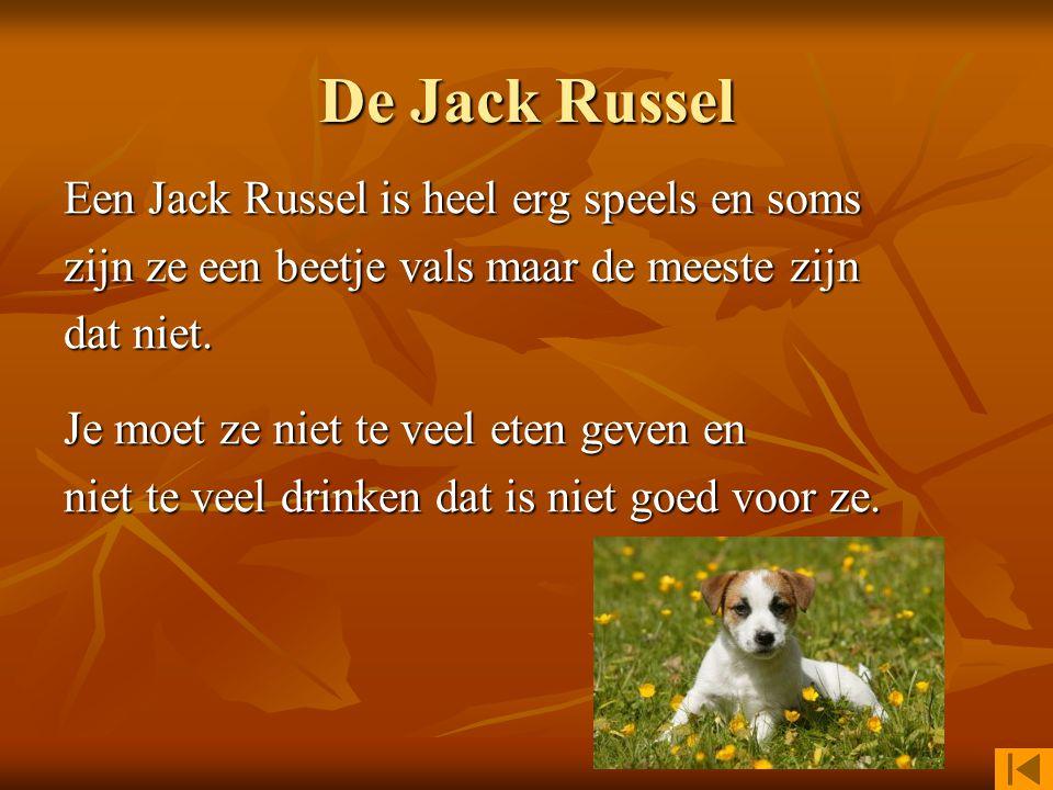 Er zijn veel verschillende soorten honden. Klik hieronder om info over een soort te vinden. Jack Russel Jack Russel Tekkel LabradorTekkel Labrador Gol