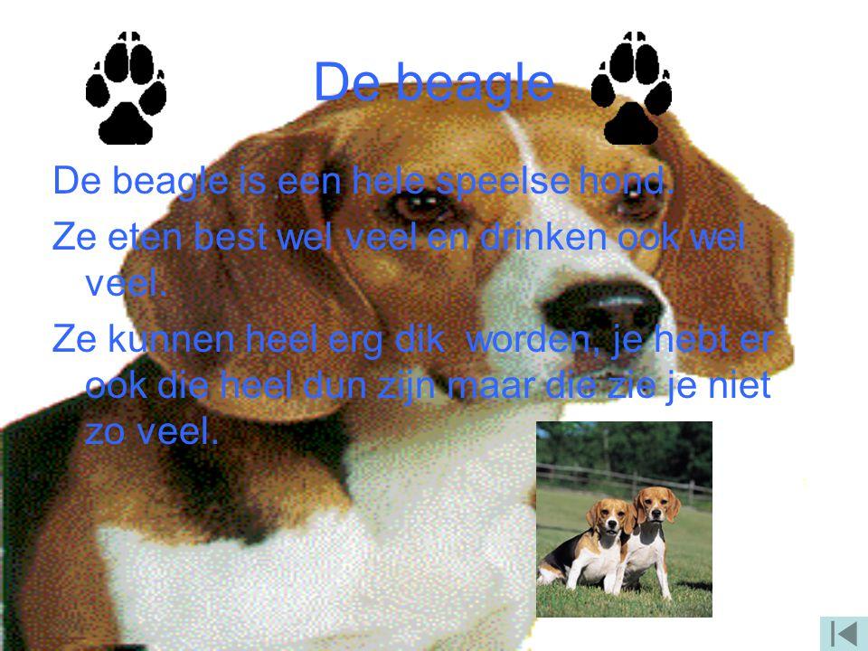 De Tekkel De Tekkel is een klein en smal hondje. Ze zijn meestal bruin. Ze drinken niet zo veel maar eten voldoende.