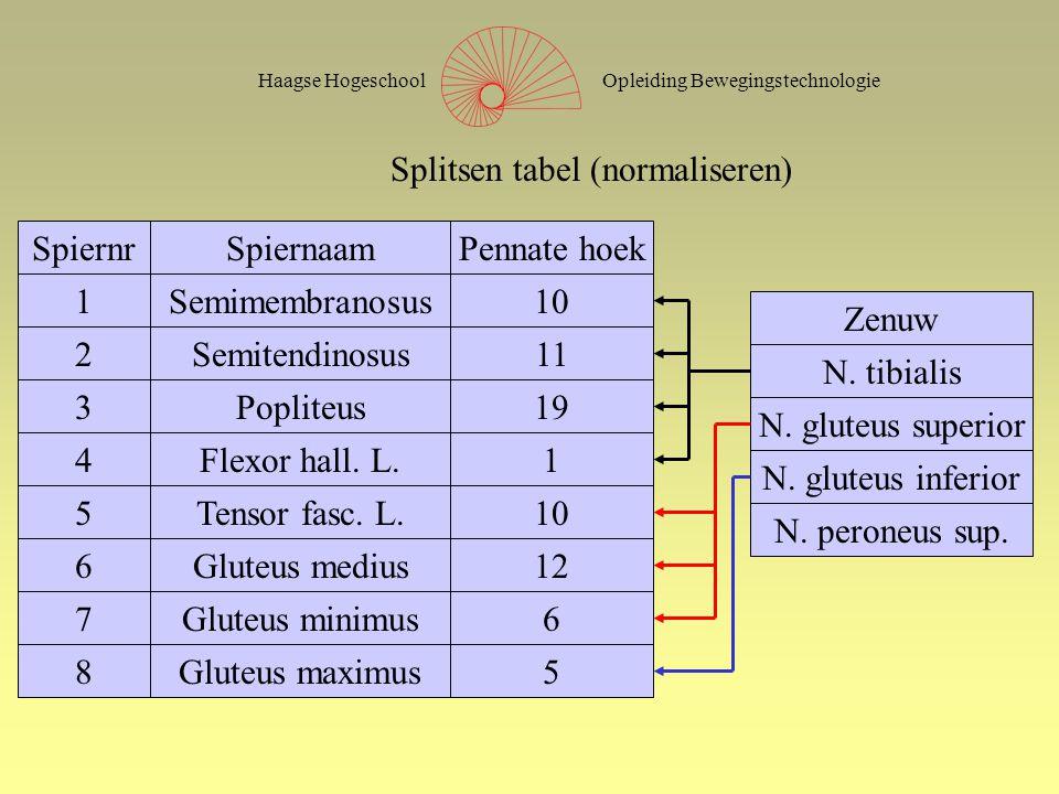 Opleiding BewegingstechnologieHaagse Hogeschool SpiernrSpiernaamPennate hoek 1Semimembranosus10 2Semitendinosus11 3Popliteus19 4Flexor hall. L.1 5Tens