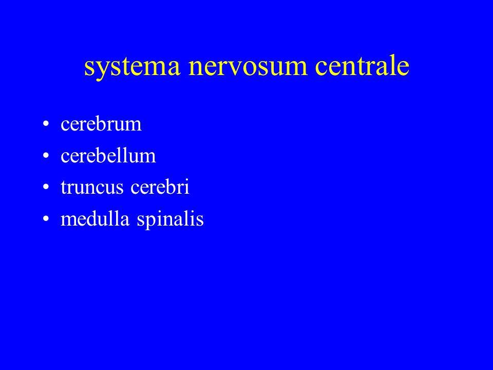 systema nervosum centrale cerebrum cerebellum truncus cerebri medulla spinalis