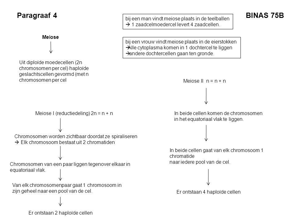 Paragraaf 4 Meiose Uit diploïde moedecellen (2n chromosomen per cel) haploïde geslachtscellen gevormd (met n chromosomen per cel Meiose I (reductiedel