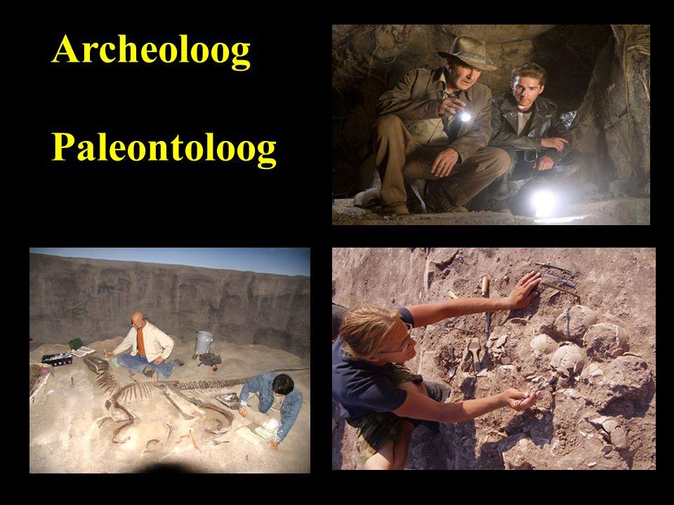 Archeoloog Paleontoloog
