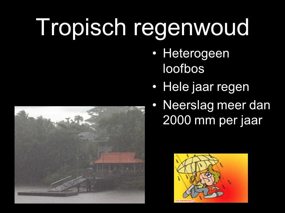 1-8-2014 Savanne Afwisselend bomen, struiken en gras 3 tot 4 maanden per jaar geen neerslag De winter is de droge periode