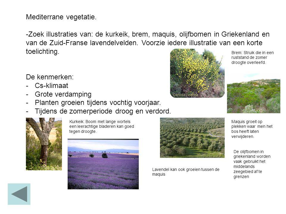 Mediterrane vegetatie. -Zoek illustraties van: de kurkeik, brem, maquis, olijfbomen in Griekenland en van de Zuid-Franse lavendelvelden. Voorzie ieder