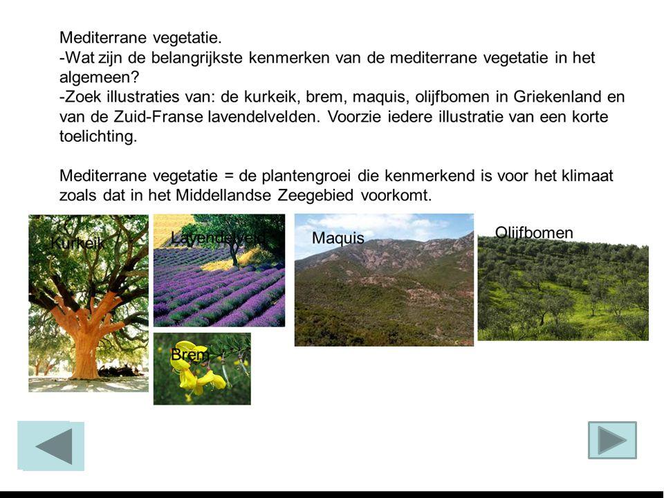 Mediterrane vegetatie. -Wat zijn de belangrijkste kenmerken van de mediterrane vegetatie in het algemeen? -Zoek illustraties van: de kurkeik, brem, ma