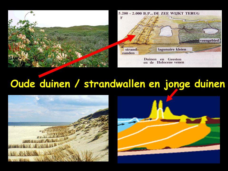 Oude duinen / strandwallen en jonge duinen
