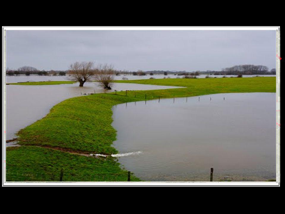 Kribben: dammetjes loodrecht op de zomerdijk in de rivier.