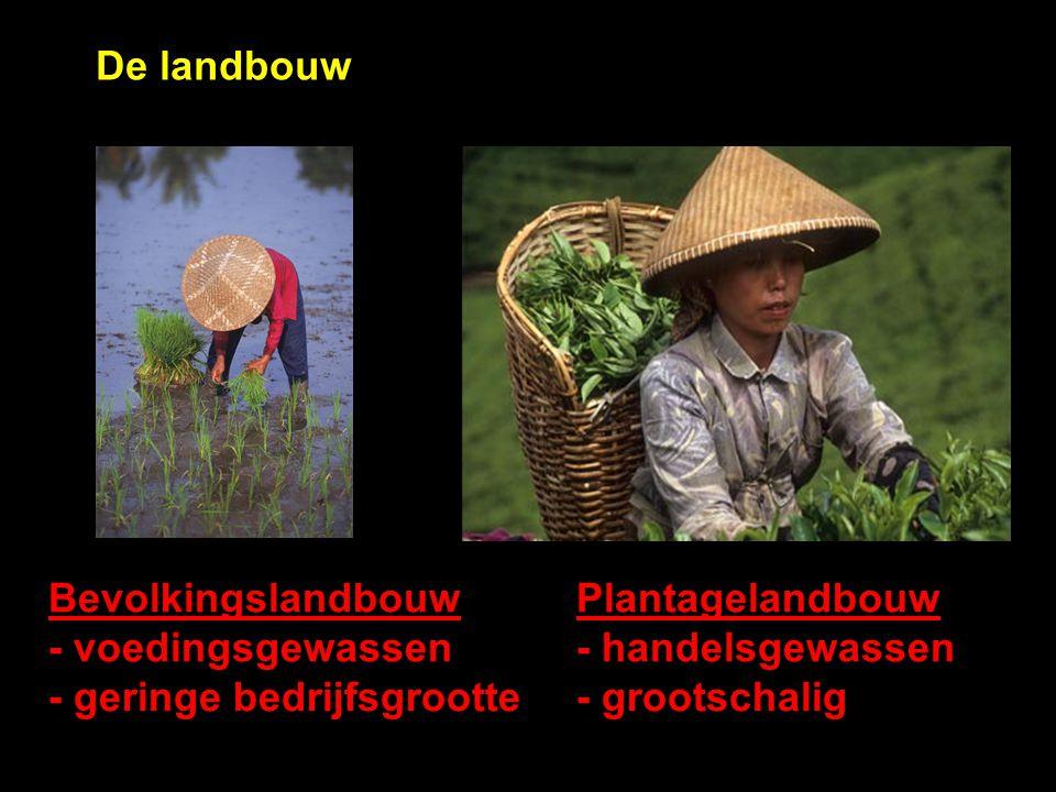 De landbouw BevolkingslandbouwPlantagelandbouw - voedingsgewassen- handelsgewassen - geringe bedrijfsgrootte- grootschalig