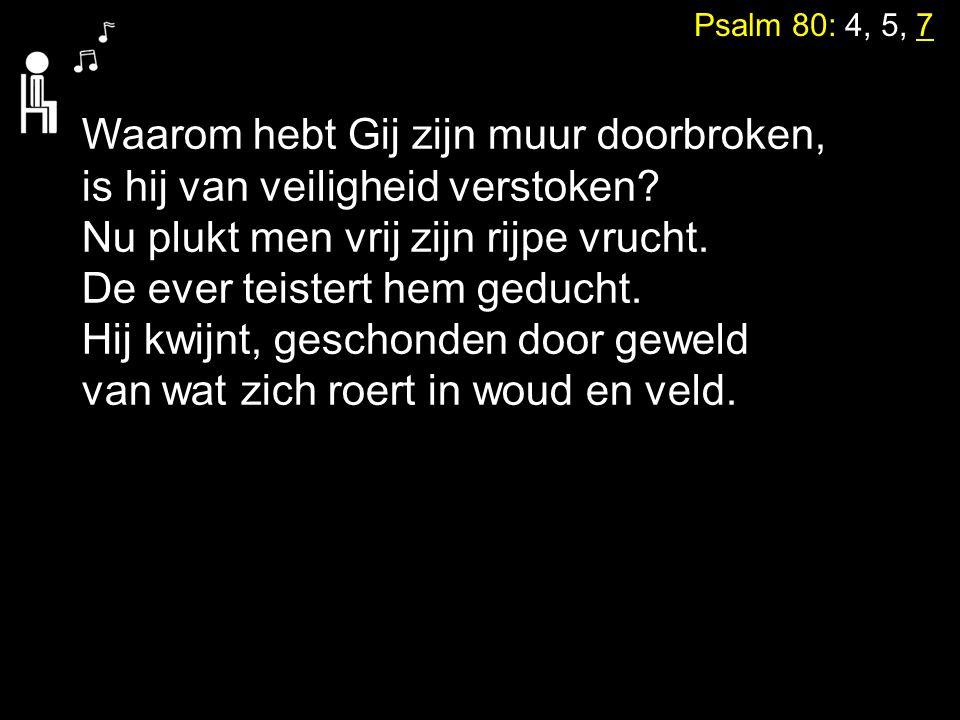 Psalm 80: 4, 5, 7 Waarom hebt Gij zijn muur doorbroken, is hij van veiligheid verstoken? Nu plukt men vrij zijn rijpe vrucht. De ever teistert hem ged
