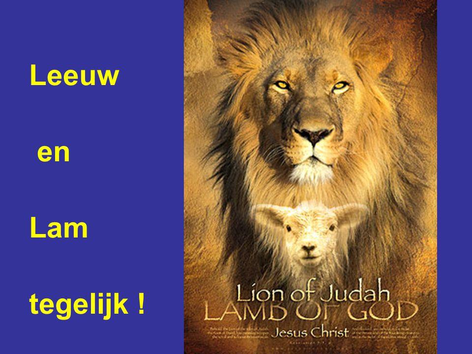 Leeuw en Lam tegelijk !