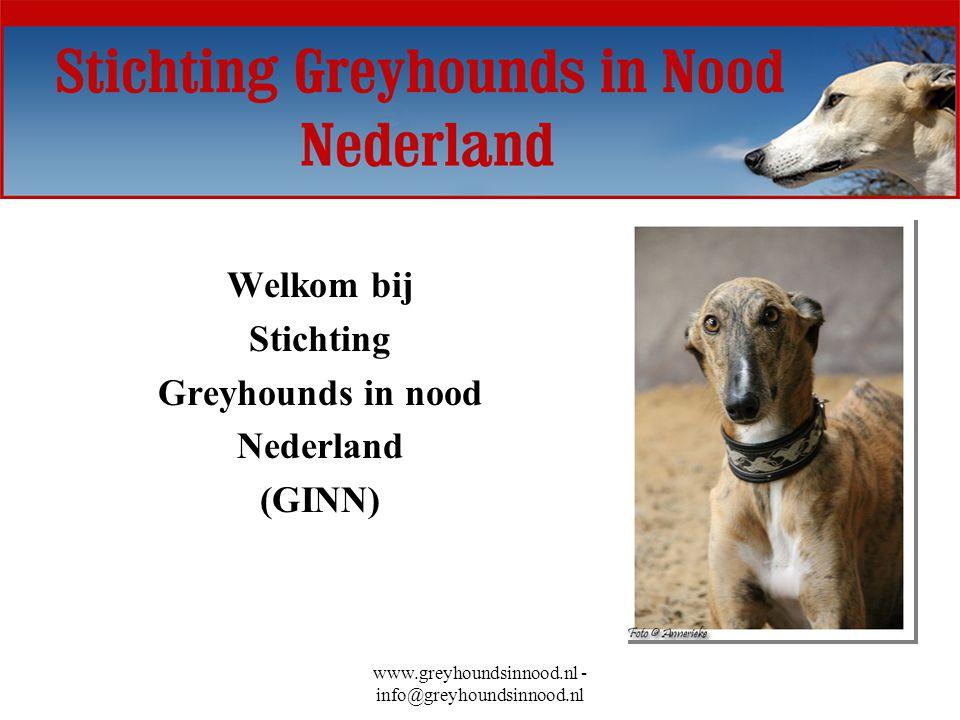 www.greyhoundsinnood.nl - info@greyhoundsinnood.nl Welkom bij Stichting Greyhounds in nood Nederland (GINN)