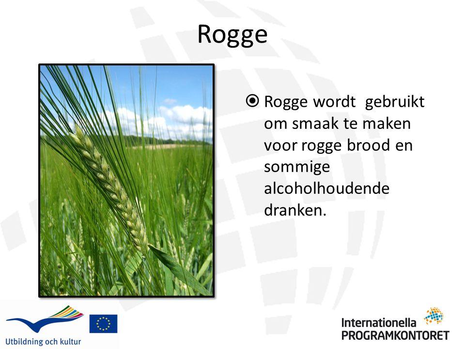Rogge  Rogge wordt gebruikt om smaak te maken voor rogge brood en sommige alcoholhoudende dranken.