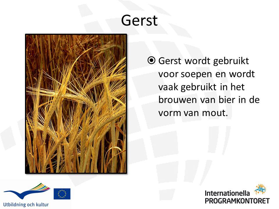 Gerst  Gerst wordt gebruikt voor soepen en wordt vaak gebruikt in het brouwen van bier in de vorm van mout.