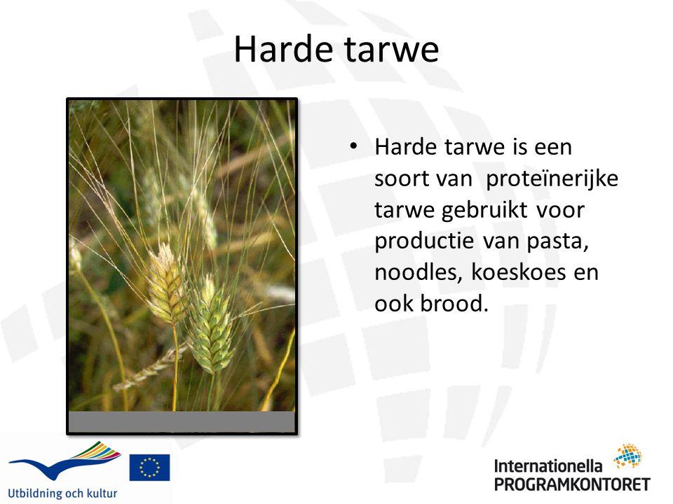 Harde tarwe Harde tarwe is een soort van proteïnerijke tarwe gebruikt voor productie van pasta, noodles, koeskoes en ook brood.