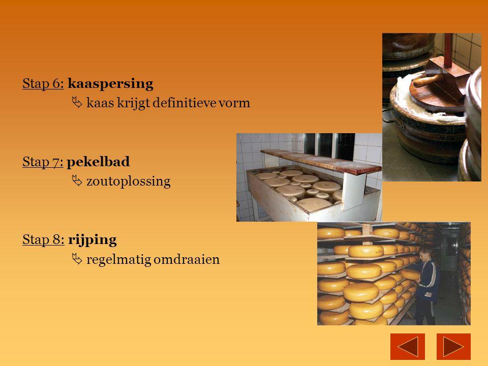 Stap 6: kaaspersing  kaas krijgt definitieve vorm Stap 7: pekelbad  zoutoplossing Stap 8: rijping  regelmatig omdraaien