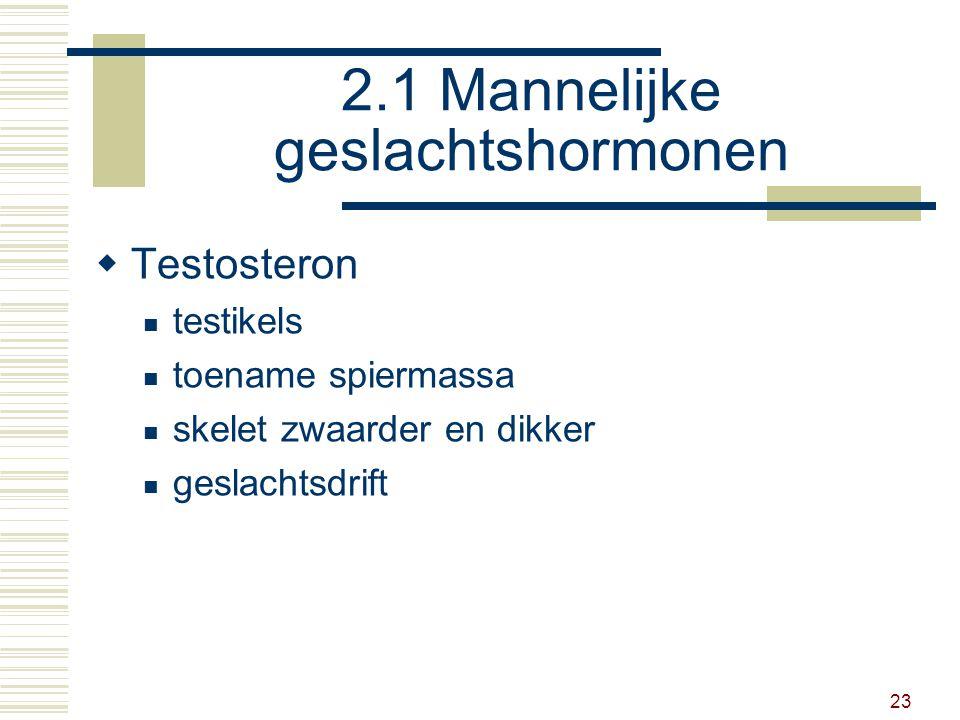 23 2.1 Mannelijke geslachtshormonen  Testosteron testikels toename spiermassa skelet zwaarder en dikker geslachtsdrift