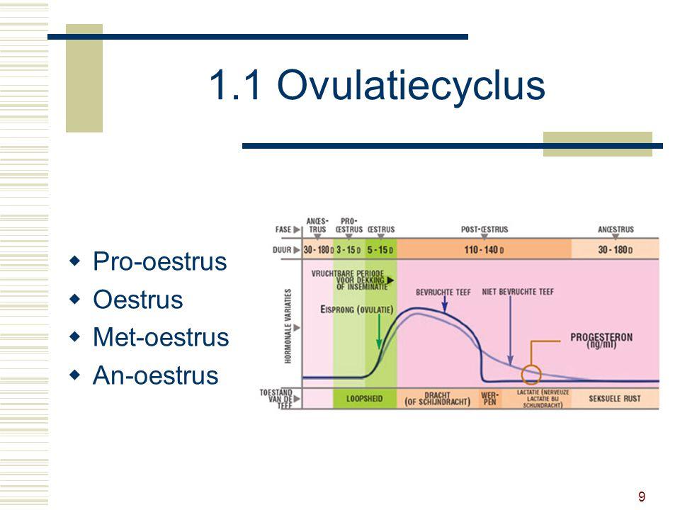 10 1.1 Ovulatiecyclus  Pro-oestrus 4 tot 15 dagen voorbereidende fase groeiende eifollikels: oestrogenen geen dekking