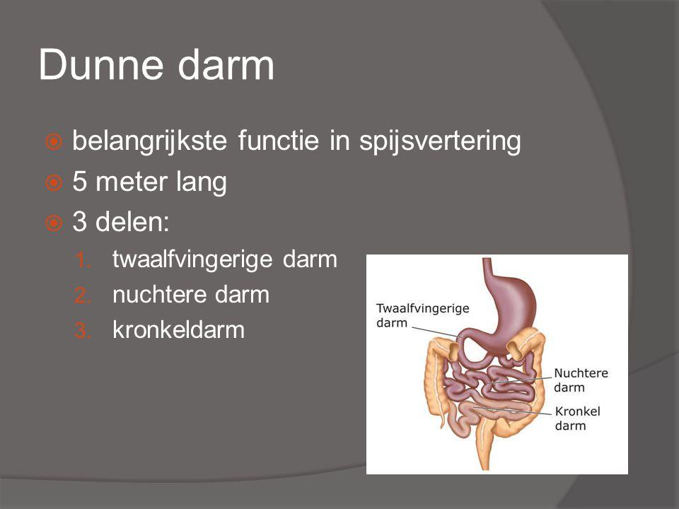 Dunne darm  belangrijkste functie in spijsvertering  5 meter lang  3 delen: 1.