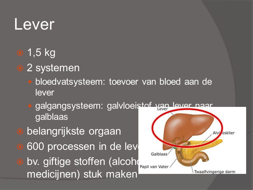 Lever  1,5 kg  2 systemen bloedvatsysteem: toevoer van bloed aan de lever galgangsysteem: galvloeistof van lever naar galblaas  belangrijkste orgaan  600 processen in de lever  bv.