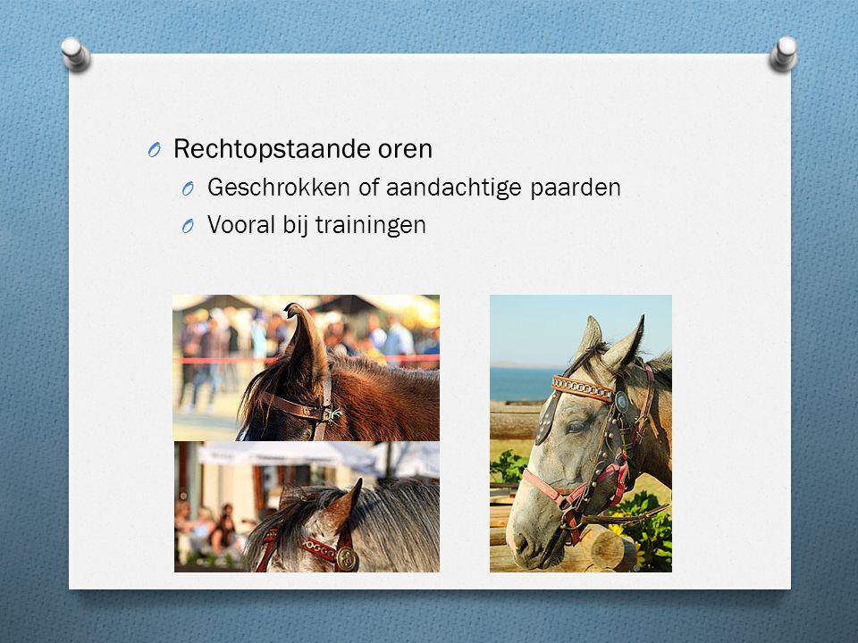 O Rechtopstaande oren O Geschrokken of aandachtige paarden O Vooral bij trainingen