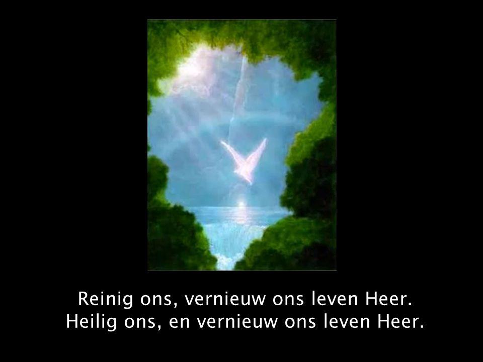 Reinig ons, vernieuw ons leven Heer. Heilig ons, en vernieuw ons leven Heer.