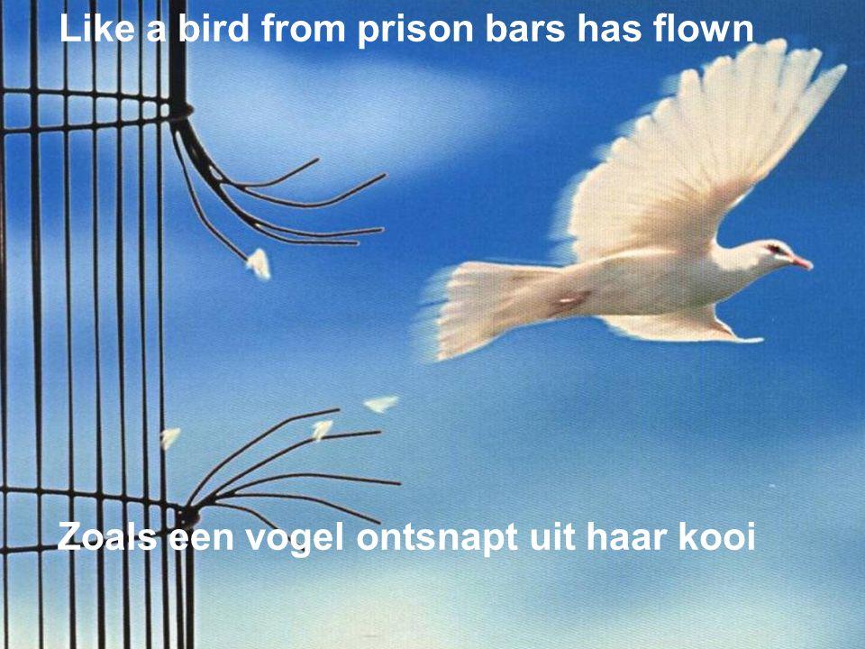 Like a bird from prison bars has flown Zoals een vogel ontsnapt uit haar kooi