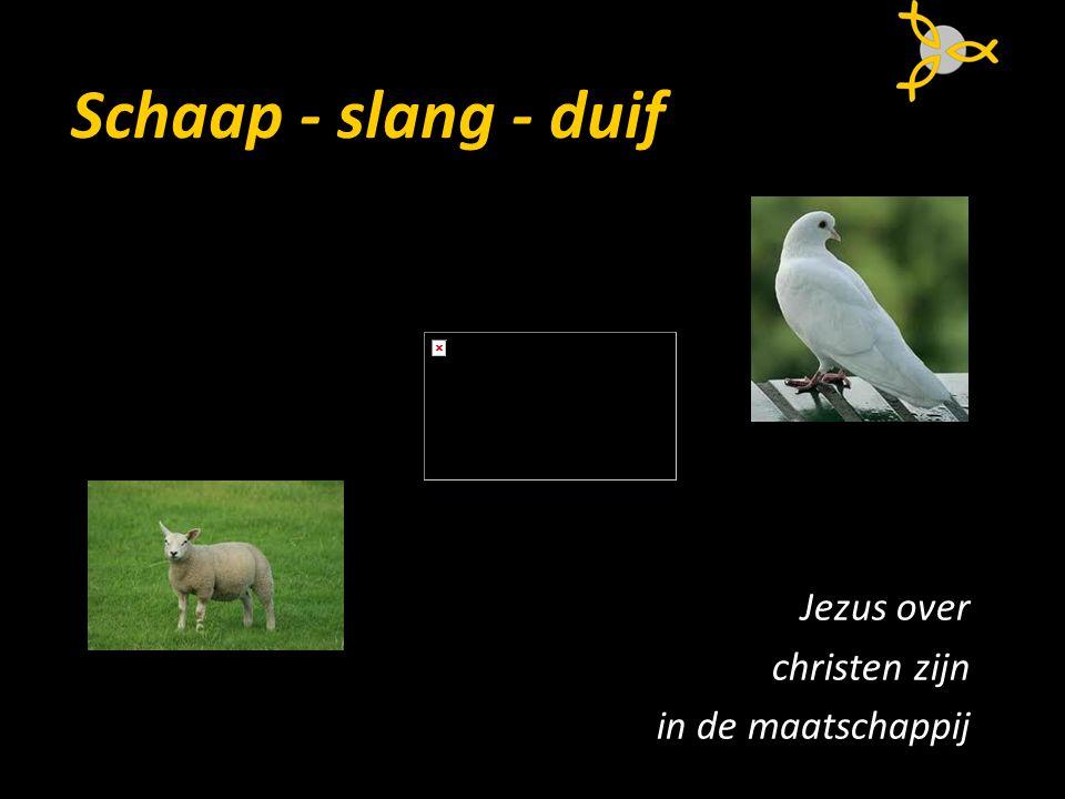 Schaap - slang - duif Jezus over christen zijn in de maatschappij