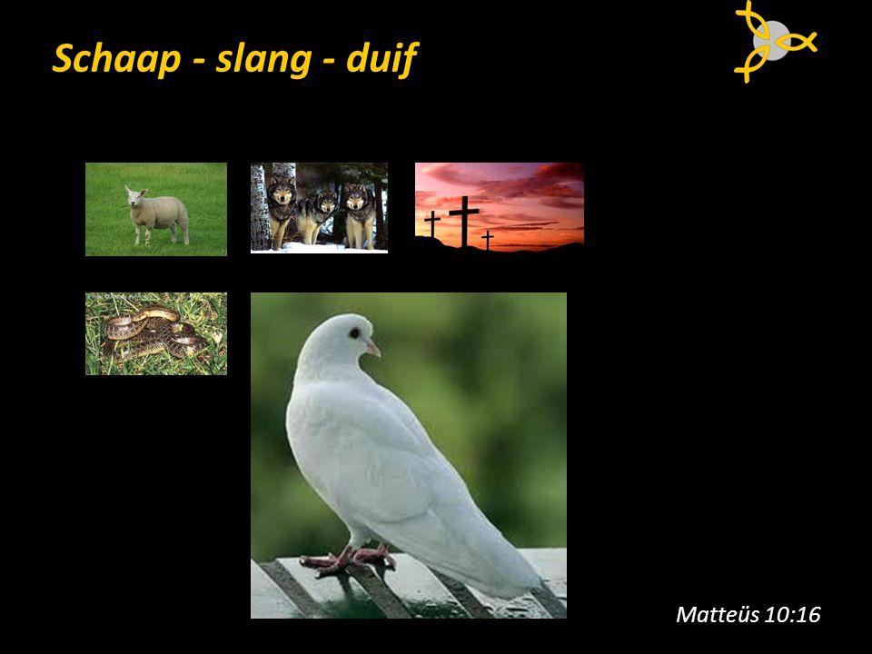 Schaap - slang - duif Matteüs 10:16