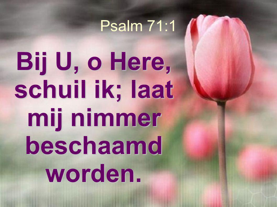 Psalm 71:1 Bij U, o Here, schuil ik; laat mij nimmer beschaamd worden.