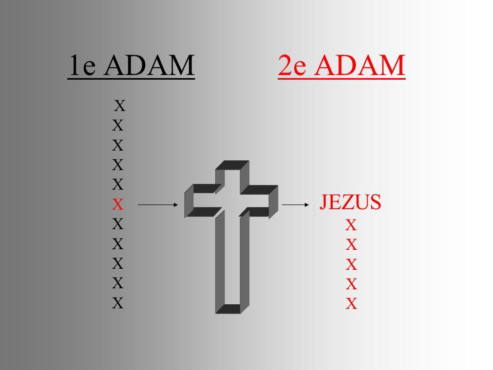 1e ADAM 2e ADAM X JEZUS X