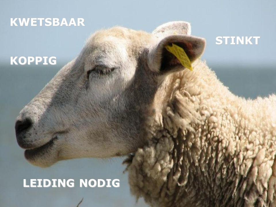 KWETSBAARKOPPIG STINKT STINKT LEIDING NODIG LEIDING NODIG