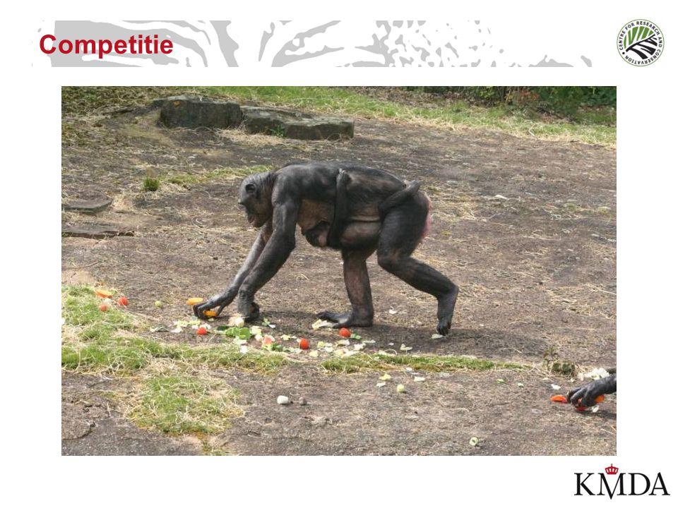 Het waarschuwende vingertje… De naturalistische drogreden (the naturalistic fallacy) –Apen zijn geen morele spiegels –Door altruïsme bij apen te bestuderen, leren we bij over hoe het gedrag geëvolueerd is bij mensen en (andere) apen, niet over hoe het zou moeten zijn omdat het in de natuur zo is.