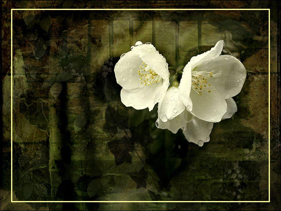 Bij het ouder worden ontdoet men zich, meestal van zijn gebreken, omdat ze toch geen enkel nut meer hebben.