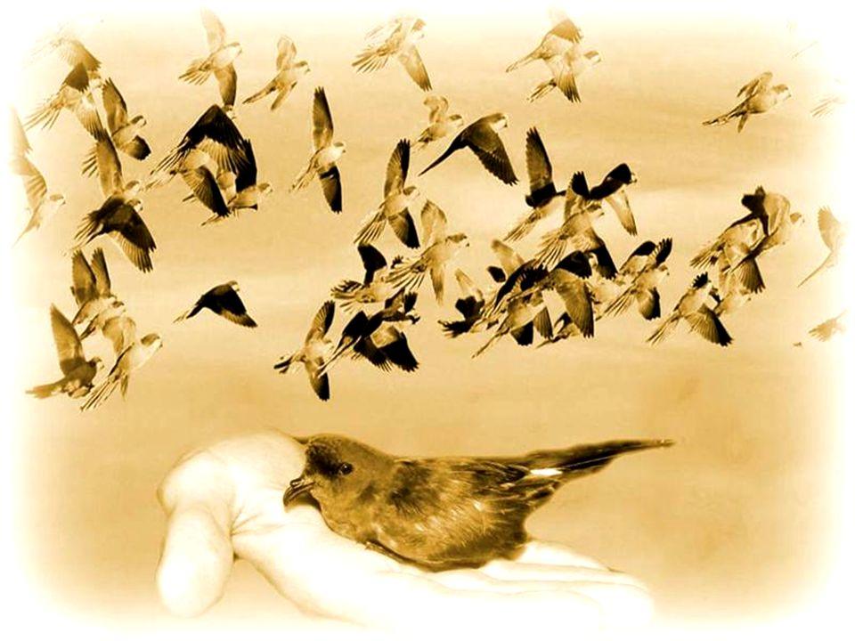 Beter één vogel in de hand dan tien in de lucht