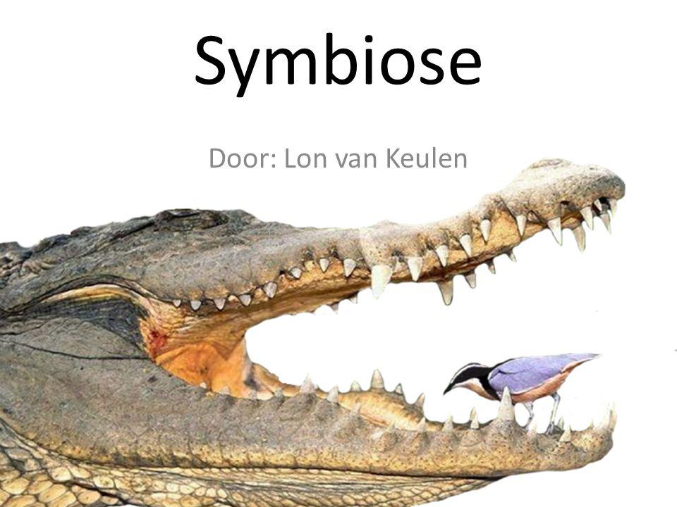 Wat is symbiose?