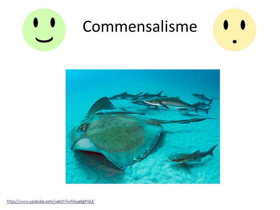 Parasitisme http://www.youtube.com/watch?v=GtCQAOStdFM